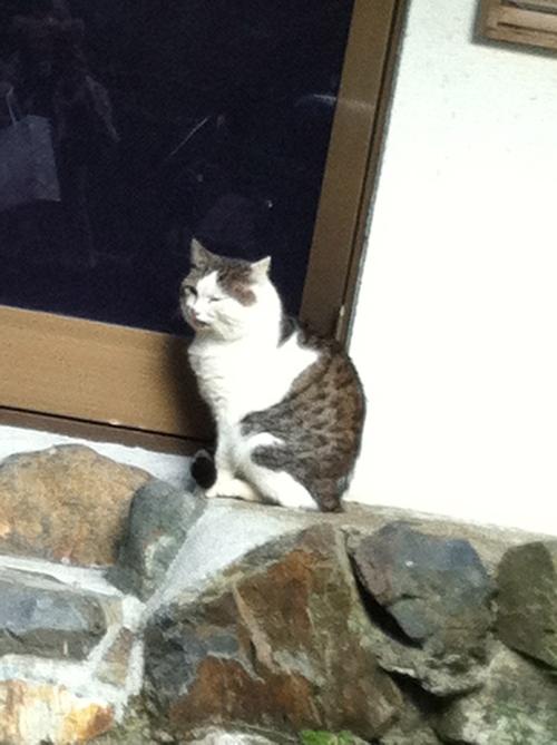 帰りたい猫_c0185356_1235516.jpg