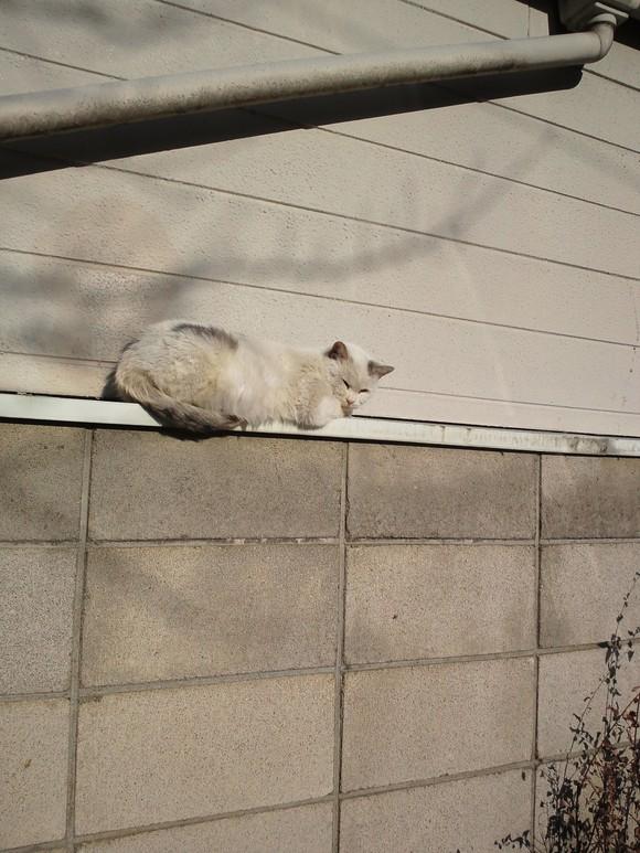 昨日は猫の日_d0061857_14333086.jpg