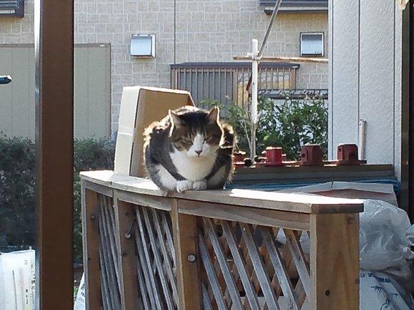 昨日は猫の日_d0061857_14334426.jpg