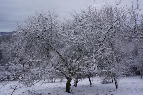 雪の森を一人で歩く_f0106597_0122238.jpg