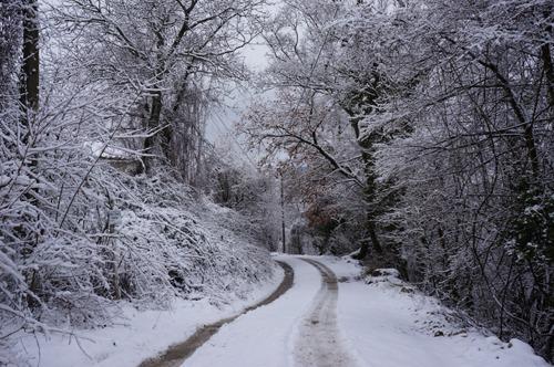 雪の森を一人で歩く_f0106597_0133233.jpg