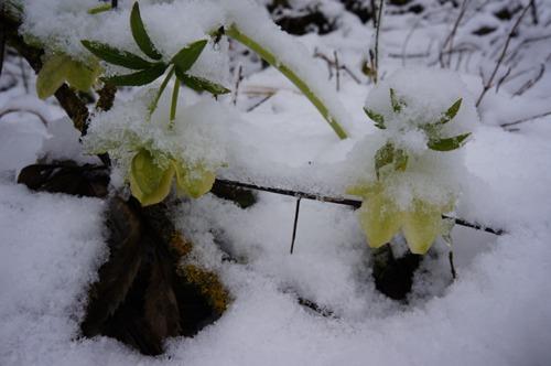 雪の森を一人で歩く_f0106597_0142223.jpg