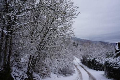 雪の森を一人で歩く_f0106597_23594440.jpg