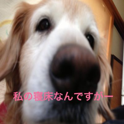 f0109202_21355789.jpg