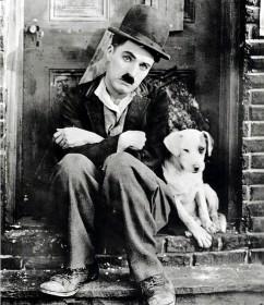 犬は確実に人の相棒_d0290407_12163352.jpg