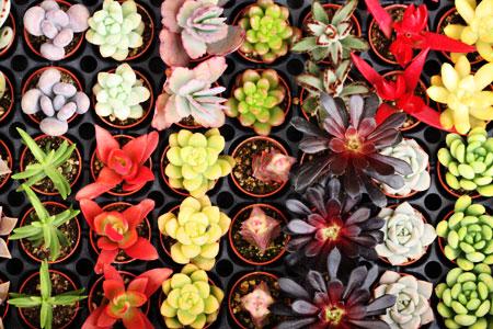plants_c0118809_15122280.jpg