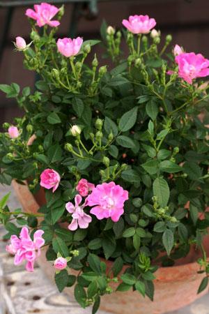 plants_c0118809_15125318.jpg