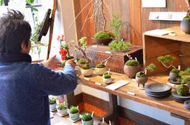 さくら盆栽展 新入荷のご案内_d0263815_1618672.jpg