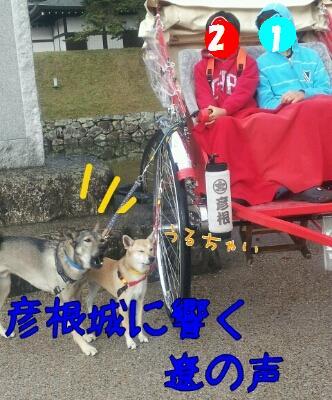 遼のUSJ☆わらびも一緒_b0207320_1754876.jpg