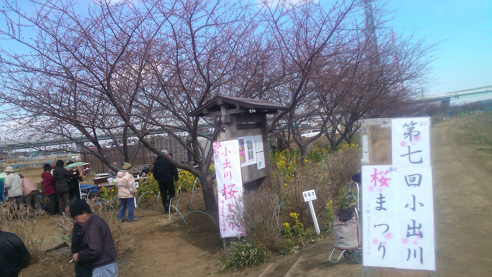 桜まつりですが.....寒さで開花しません。_b0137932_13484557.jpg