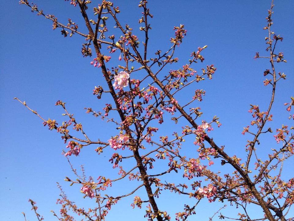 """家族で…愛宕神社~縁起のいい""""桜咲く~""""桜の花…見つけました(^o^)_d0082356_9313271.jpg"""