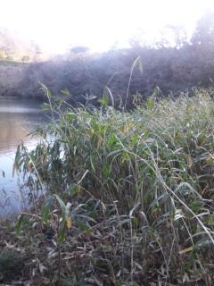 堤の草刈_e0081959_2122880.jpg