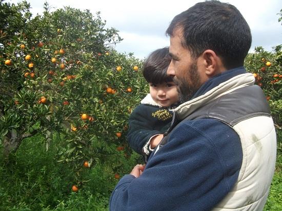 オレンジ畑_f0253303_23545163.jpg