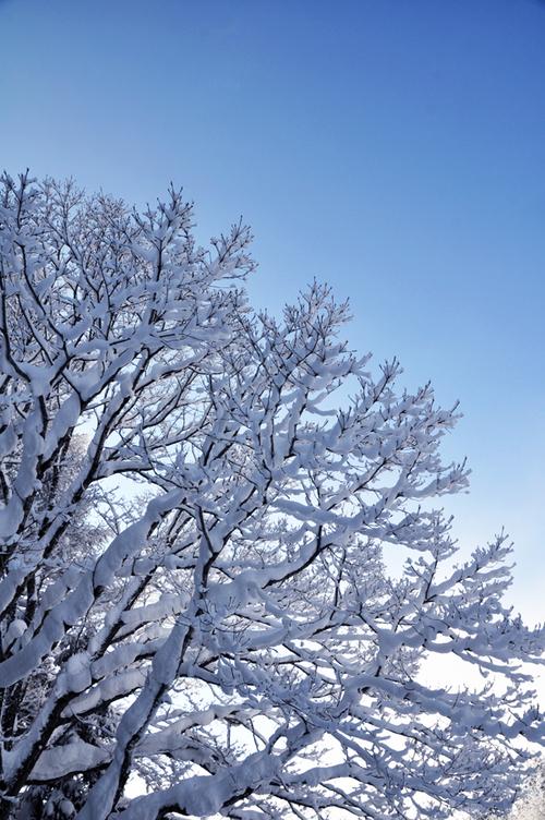 晴れた冬の朝に・・・_e0162117_9251119.jpg