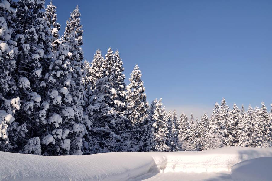 晴れた冬の朝に・・・_e0162117_9252720.jpg
