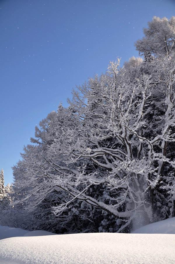 晴れた冬の朝に・・・_e0162117_9254240.jpg