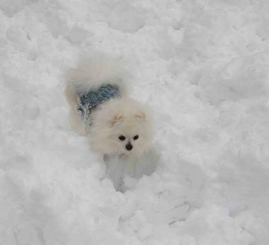 京都の雪山_b0177436_1051506.jpg