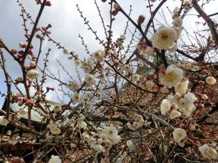 梅花祭_e0230141_1740332.jpg