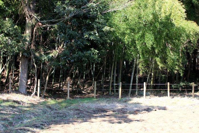 2013.2.24 里山公園・ルリビタキ、シジュウカラ、モズ_c0269342_771716.jpg
