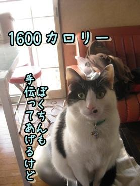 b0151748_12151573.jpg