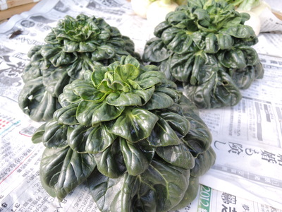 奈良オーガニックマーケット_b0252363_13283947.jpg