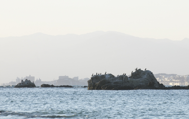 葉山の海_f0018464_2153112.jpg