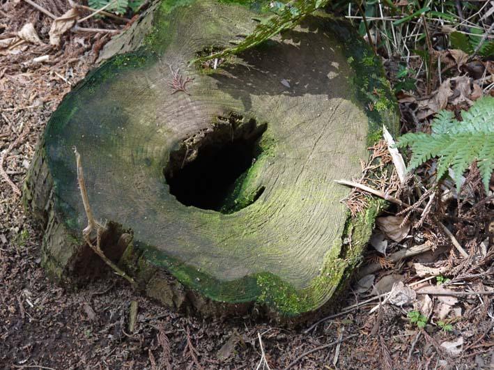 検証:六国見山の樹木はなぜ、かくも多数倒れ、折れるのか_c0014967_12412837.jpg