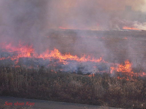 鵜殿のヨシ原焼き 2013年2月24日_a0164068_0403828.jpg