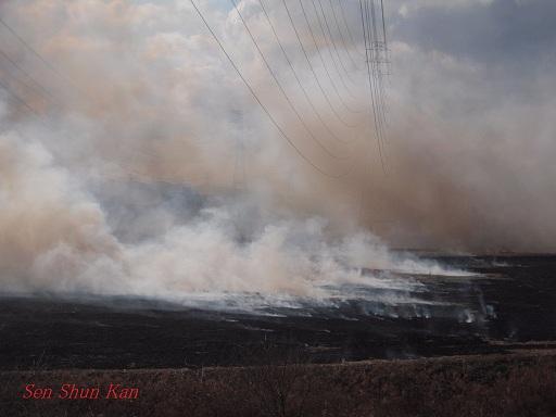 鵜殿のヨシ原焼き 2013年2月24日_a0164068_041147.jpg