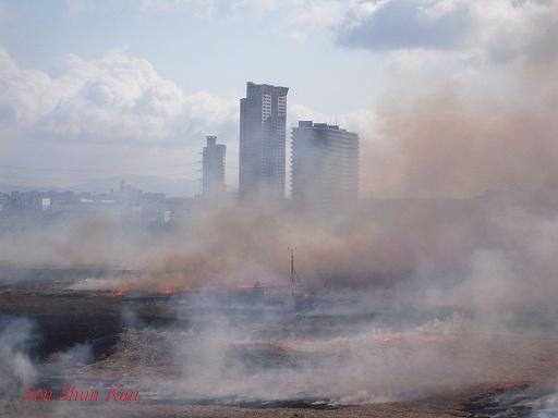 鵜殿のヨシ原焼き 2013年2月24日_a0164068_0411977.jpg