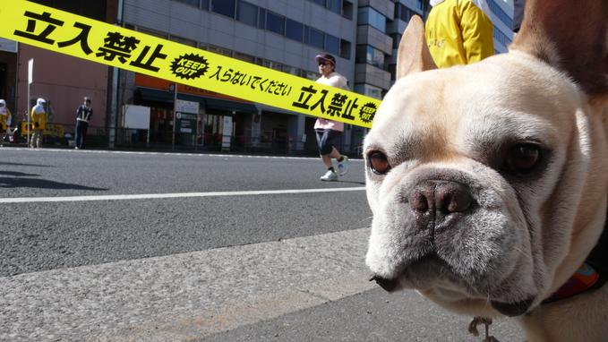 東京マラソン2013。_f0143269_018142.jpg