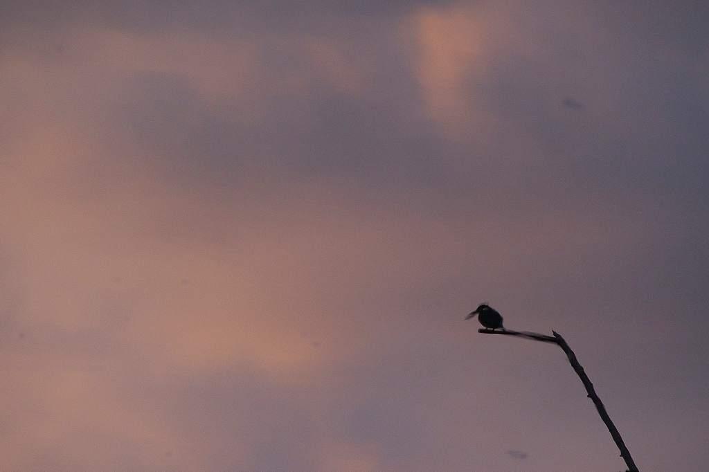 ルリビタキ/今日のカワセミ&アリスイ/地震雲??/満月_b0024798_20555775.jpg
