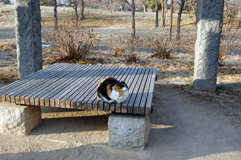 大好きな公園で遊んだあとは,3度洗いの刑が待ってました_a0155999_083513.jpg