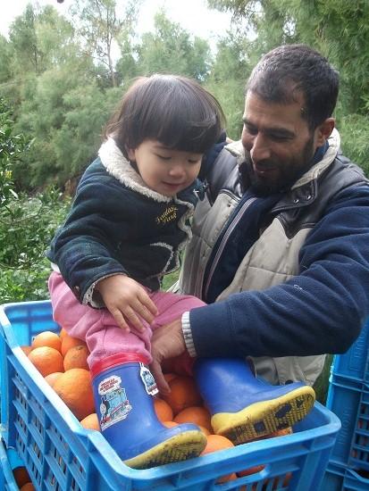オレンジ畑_f0253303_034351.jpg