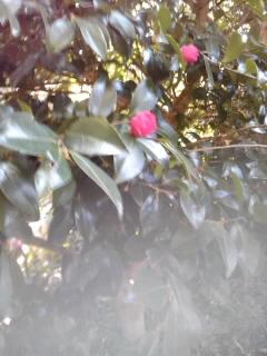 春ですね_e0033609_1063468.jpg