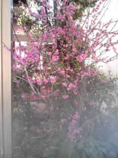春ですね_e0033609_1063497.jpg