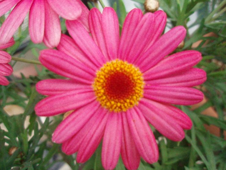 お花 咲くかな?_f0249710_2265022.jpg