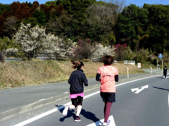 熊本県大津町 ジョギングフェスティバル1_e0048413_194452.jpg