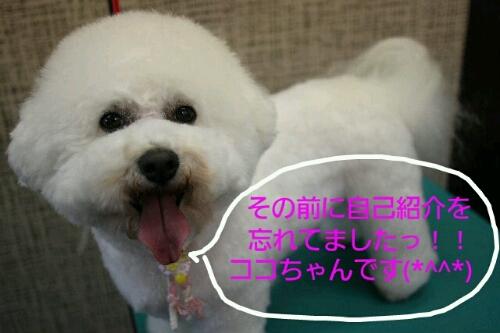 こんばんは!!!_b0130018_1712323.jpg