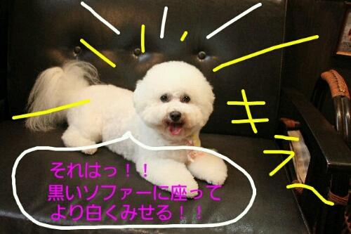 こんばんは!!!_b0130018_17133920.jpg