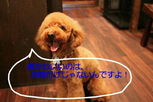 こんばんは!!!_b0130018_17225795.jpg