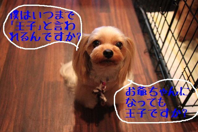 b0130018_2362734.jpg