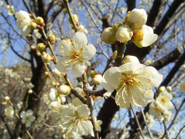 3月の営業と竹本さんの器_b0206421_12372123.jpg