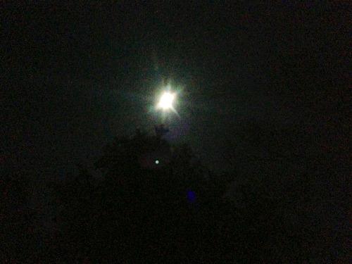 月明かり_b0174425_2023314.jpg