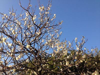 春待優子_d0123425_2242643.jpg