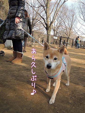 土日のおっきな公園まとめ_c0062832_4153215.jpg