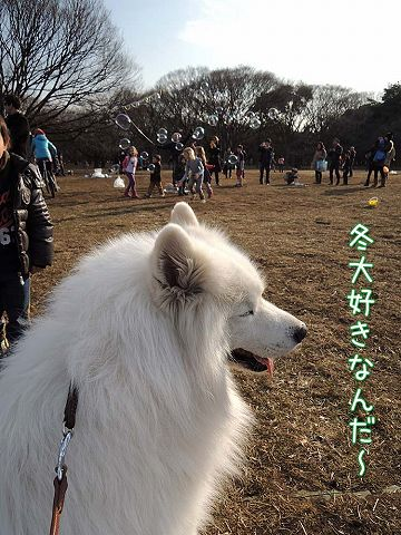 土日のおっきな公園まとめ_c0062832_4154077.jpg