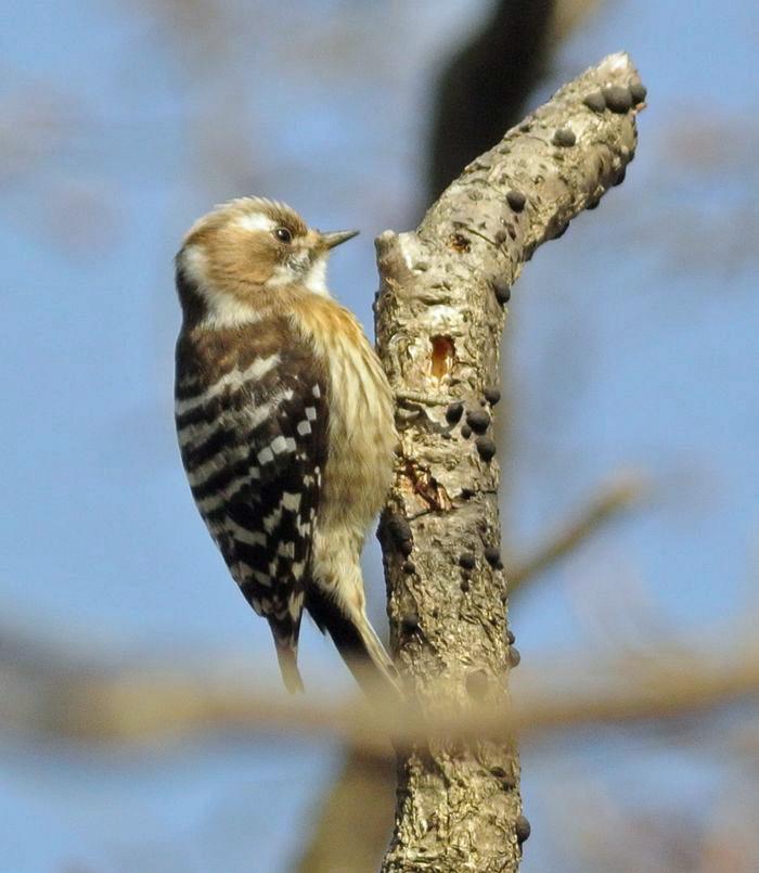 近所の森の野鳥たち_e0089232_17573757.jpg
