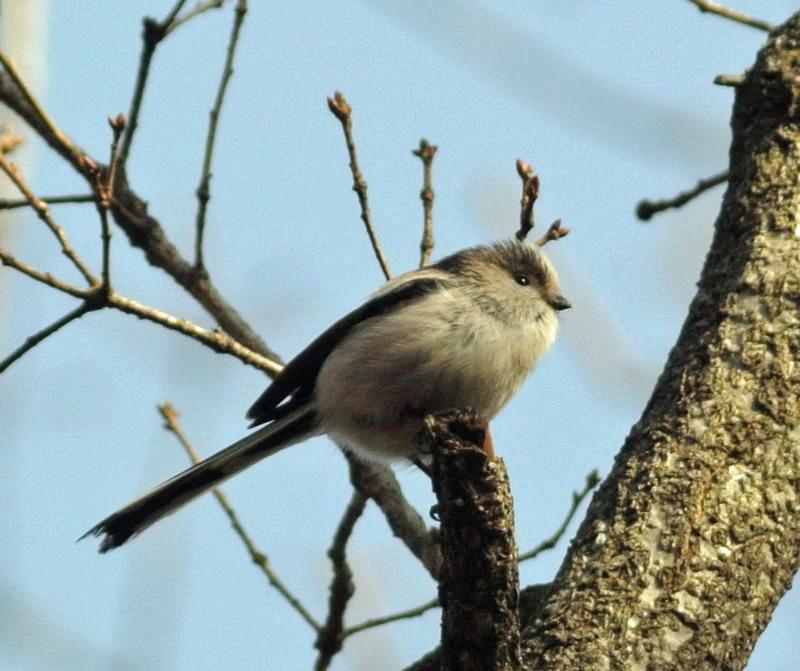 近所の森の野鳥たち_e0089232_17582481.jpg