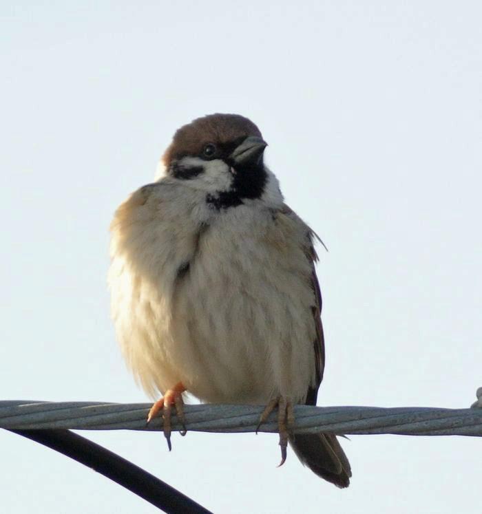 近所の森の野鳥たち_e0089232_1758485.jpg